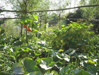 Tuin uitleg: nts tuin van de maand mei landgoed de hertgang halsteren.